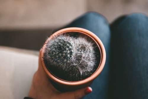 Hand Cactus Plant Free Photo