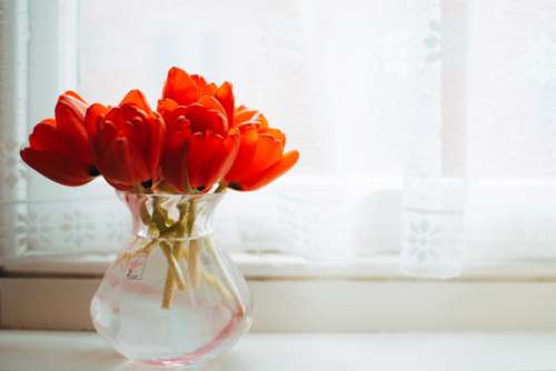 Red Bunch Vase Free Photo