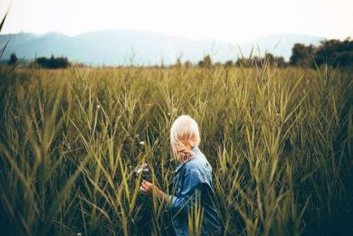 Woman Wheat Field Blonde Free Photo