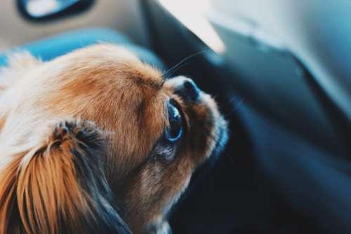 Animal Dog Pet Free Photo