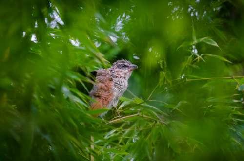 Bird in Trees Free Photo