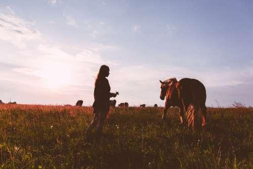 Girl Horse Sunset Field Woman Free Photo