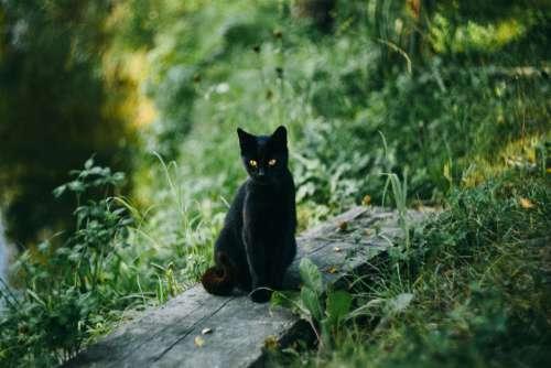 Black Cat Pond Free Photo