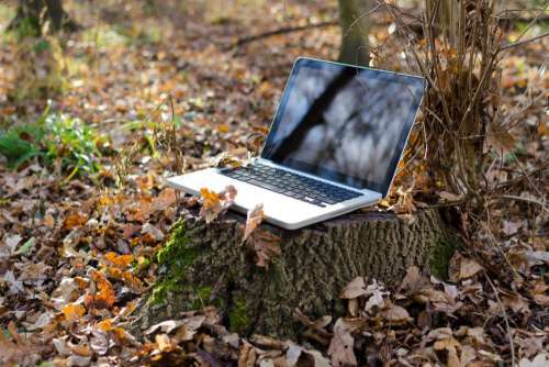 Laptop Tree Leaves Autumn Fall Free Photo