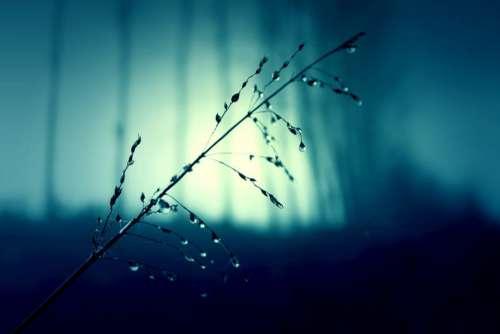 Raindrops Plant Water Free Photo