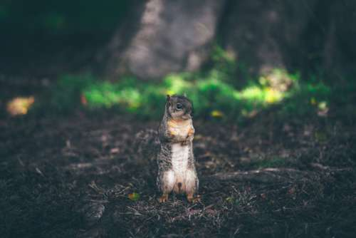 Brown White Squirrel Forest Free Photo