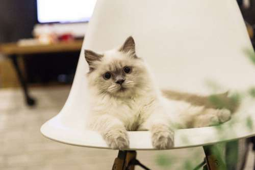Cat with Large Eyes on Chair Free Photo