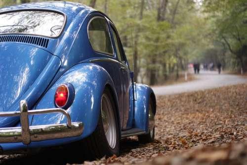 Blue Volkswagen Beetle Forest Free Photo