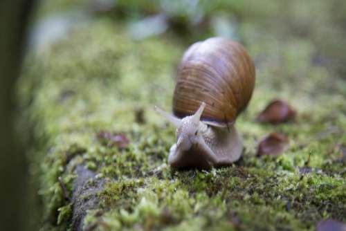 Snail Moss Closeup Free Photo