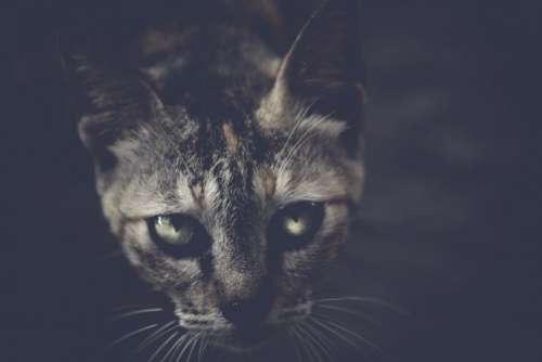 Black Cat Dark Free Photo