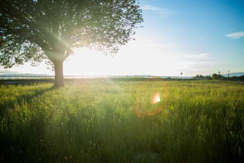 Sun Rays Tree Field Free Photo