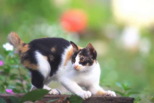 Pet Cat Garden Free Photo