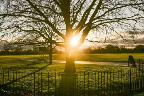 Park Fence Tree Sunset Free Photo