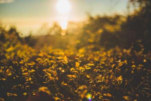 Flowers Sunset Bokeh Free Photo