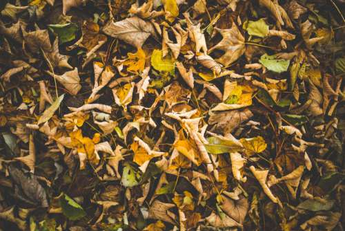 Brown & Green Autumn Leaves Free Photo