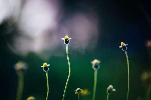 Flowers Growing Garden Free Photo