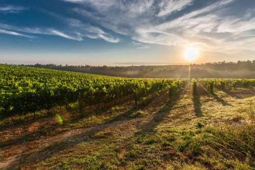 Tuscany Vineyards Sunset Free Photo