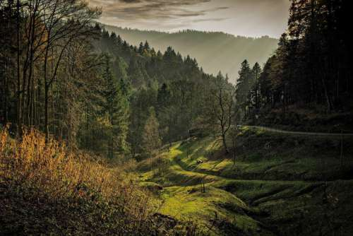 Black Forest Dawn Free Photo
