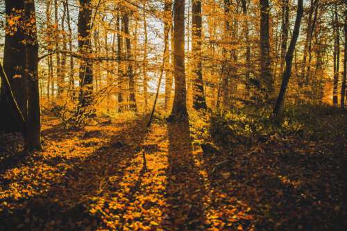Shadow Autumn Forest Free Photo