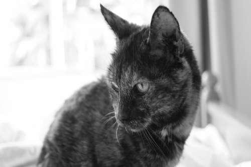 Cat Kitten Bed Free Photo