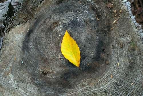 Autumn Leaf on Wood Free Photo