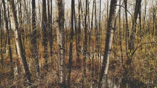 Wetland Forest Trees Free Photo
