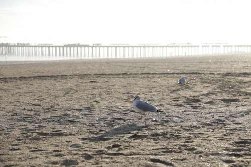 Seagulls on Beach Free Photo