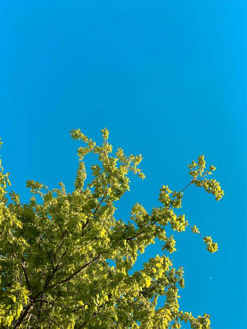 Green Leaves Against Bright Sky Free Photo