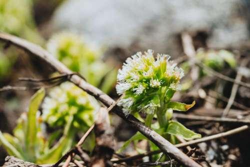 Mountain Flowers #2 Free Photo