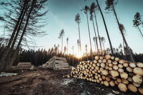 Piles of Wood Logs Forestry Free Photo
