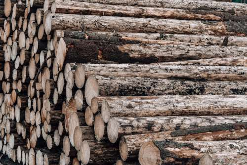 Wood Logs Free Photo