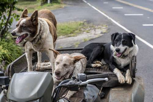 Dogs Cute Pets Animal Riders Greetings Hello