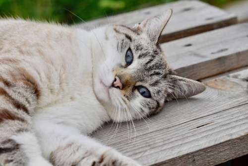 Cat Feline Animal Mammal Relax Sleep Outdoor