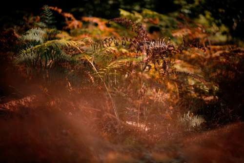 Autumn Nature Bracken Forest Mood Colors Light
