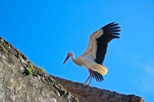 Cigogne Stork Animal Bird Oiseau Rabar Morocco