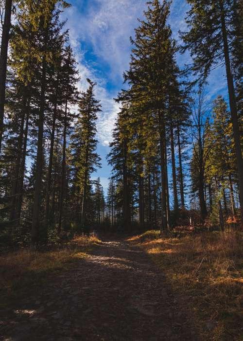 Pilsko Beskidy Beskids Poland Mountains Landscape