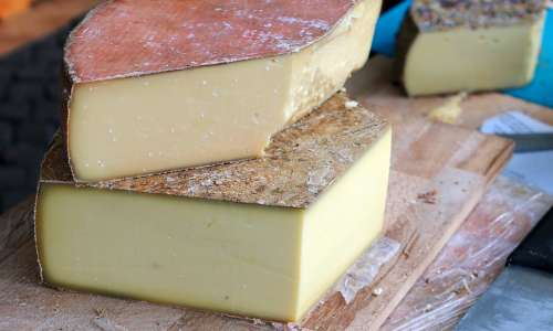 Cheese Milk Product Food Eat Delicious Healthy