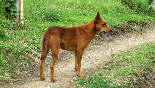 Animal Dog Farmer Domestic Colombia