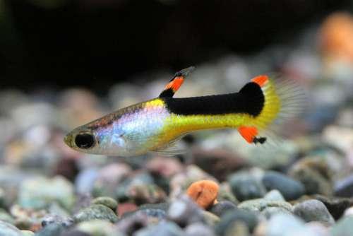 Aquarium Water Tank Tropical Fish Fish