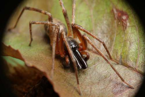 Arachnid Spider Insect Nature Queliceros Garden
