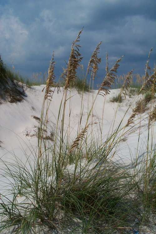 Beach Sea Oats Sand Coast Sky Florida Seashore