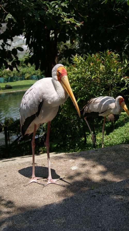 Bird Animal Nature Fauna Feather Wings