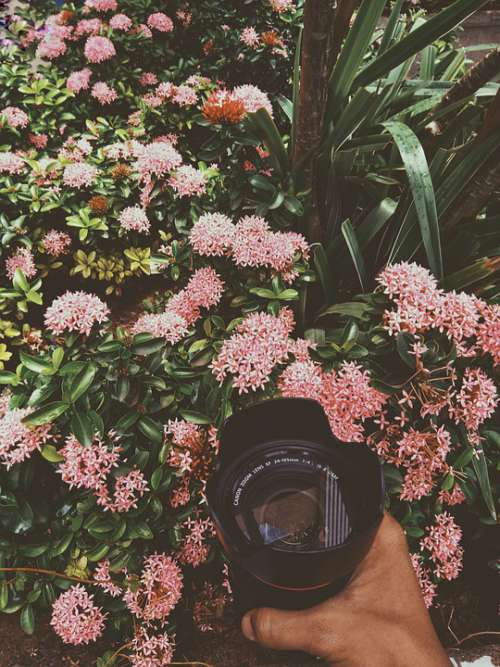 Blossom Peace Nature Pink Natural Camera Lens