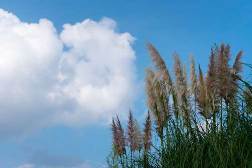 Cloud Cumulus White Cloud Blue Sky Sunny Days