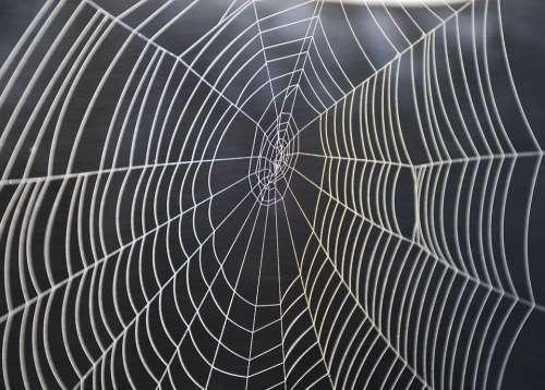 Cobweb Spider Nature Animal Fabric Close Up