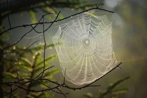 Cobweb Spider Insect Nature Web Creepy Case