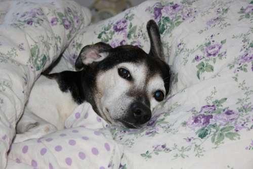 Dog Bed Pets Fun Rest Comfortable Sleep Sweet