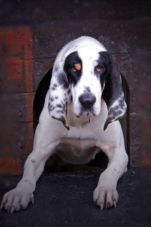 Dog Dog Kennel Animal Paw Snout Fur