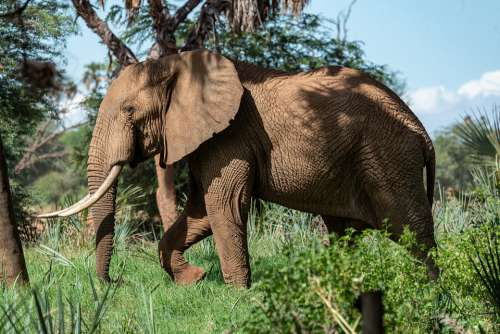 Elephant Africa Safari Animals Nature Wilderness