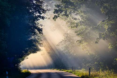 Fog Sunbeam Road Trees Mood Landscape Mystical